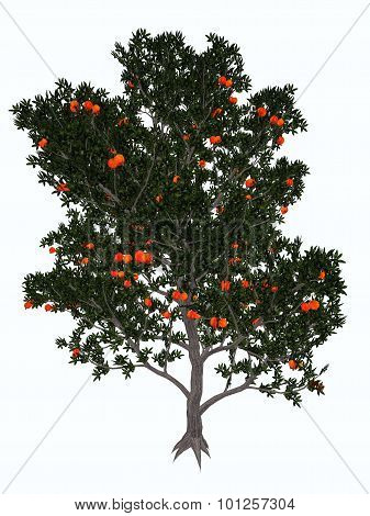 Pomegranate, punica granatum, tree isolated in white background - 3D render poster