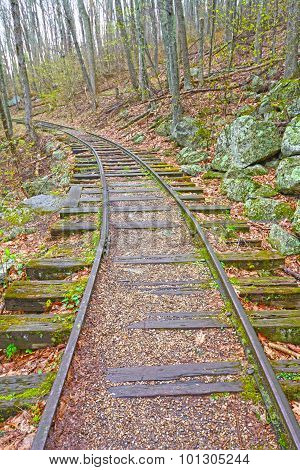 Old Railroad In The Forest