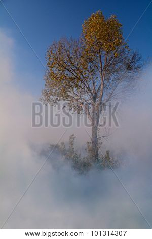 Tree In A Cloud Of Smaoke
