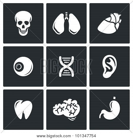 Internal organs icons. Vector Illustration. Isolated Flat Icons collection on a black background for design