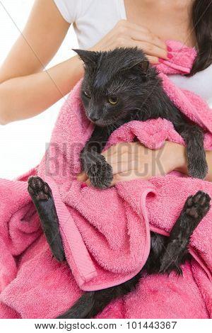 Cute Soggy Cat After Bath