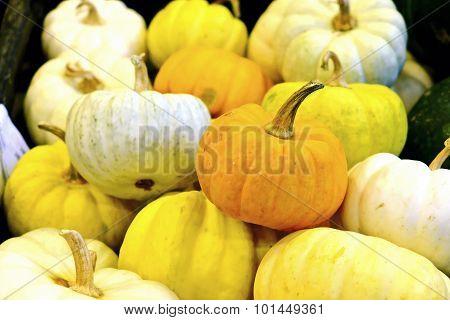 Small Pumkin, White And Yellow Pumkin