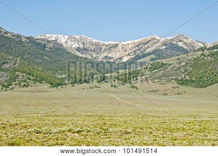 Spring Mountain Canyon