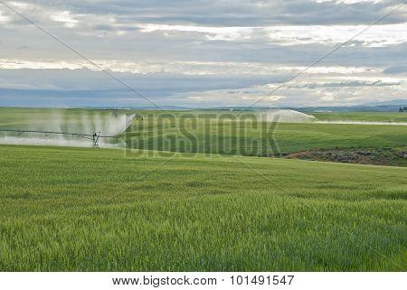 Stormy Farmland