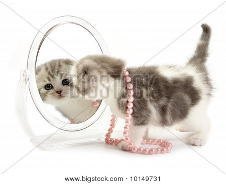 The kitten decorated by a beads looks in a mirror poster
