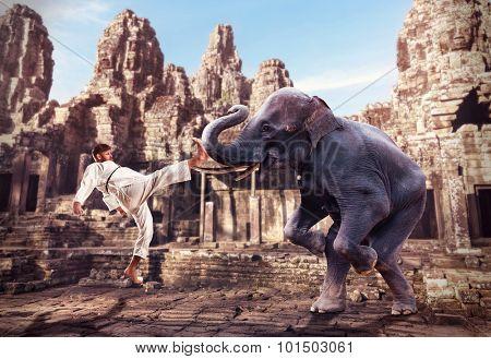 Karateka fights with elephant