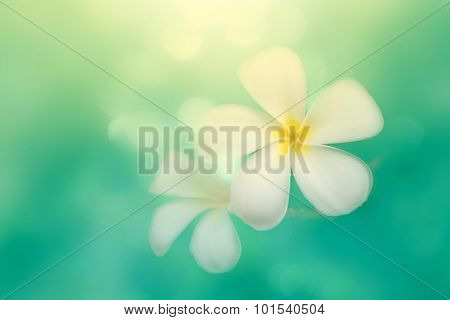 Blur Plumeria With Bokeh Background, Vintage Image With Soft Focused Plumeria With Blur Bokeh Backgr