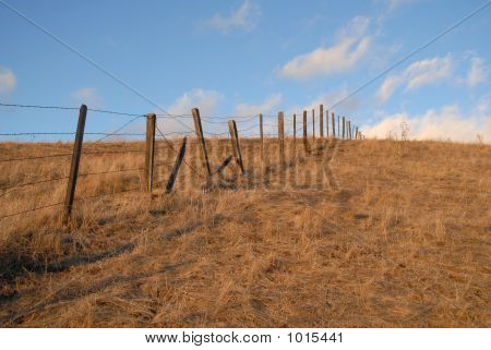 Barbed Wire (#31)