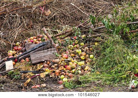 Compost Heap With Grass And Apples