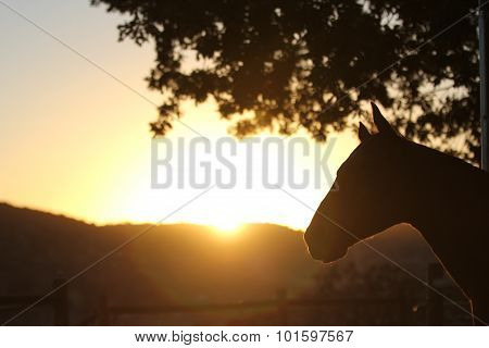 A silhouette of a horse with the sun rising.