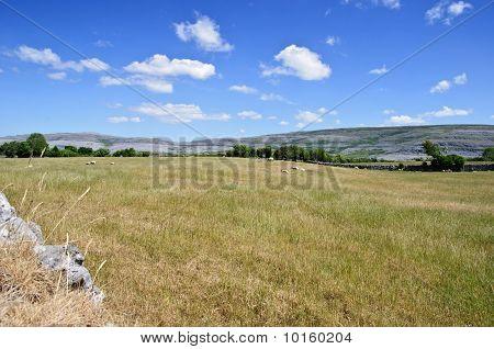 Protected Burren Limestone Landscape In Ireland