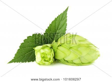 The Flower With The Leaf Hops.