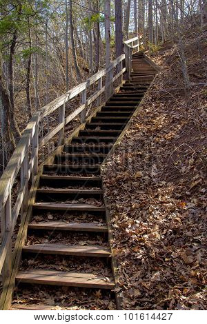 A crooked Stairs case in the woods