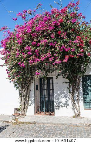 Colonia Del Sacramento, Uurguay, Historic Street, Traveling South America.