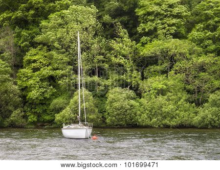 Sailboat Drifting by Forest