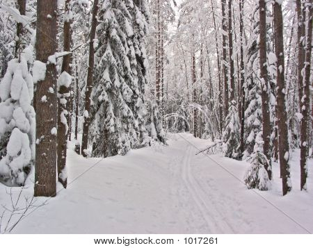 Winter Forest. Snow Way