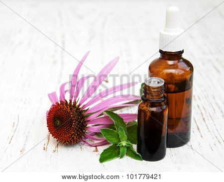 Bottles With Essence Oil With Purple Echinacea