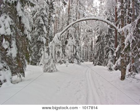 Winter Forest. Snow Arc