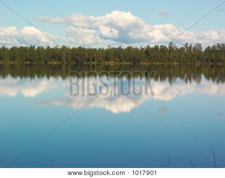 Forest Lake Mirror