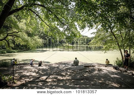 View On The Turtle Pond In Central Park In New York