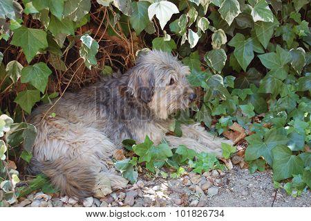 perro pastor