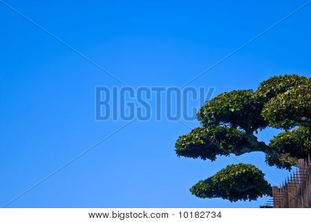 Japanese Topiary Tree On Blue Sky Landscape