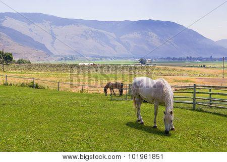 Horses  at ranch.