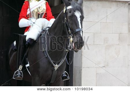 Black horse under the guardsman in red coat and black jackboot