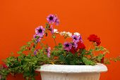 vase with various color flowers and orange wall poster