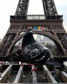 eiffel tower in paris with a pigeon poster