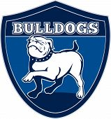 "illustration of a Proud English bulldog marching with words ""bulldogs"" in background set inside a shield suitable for any sports team mascot poster"