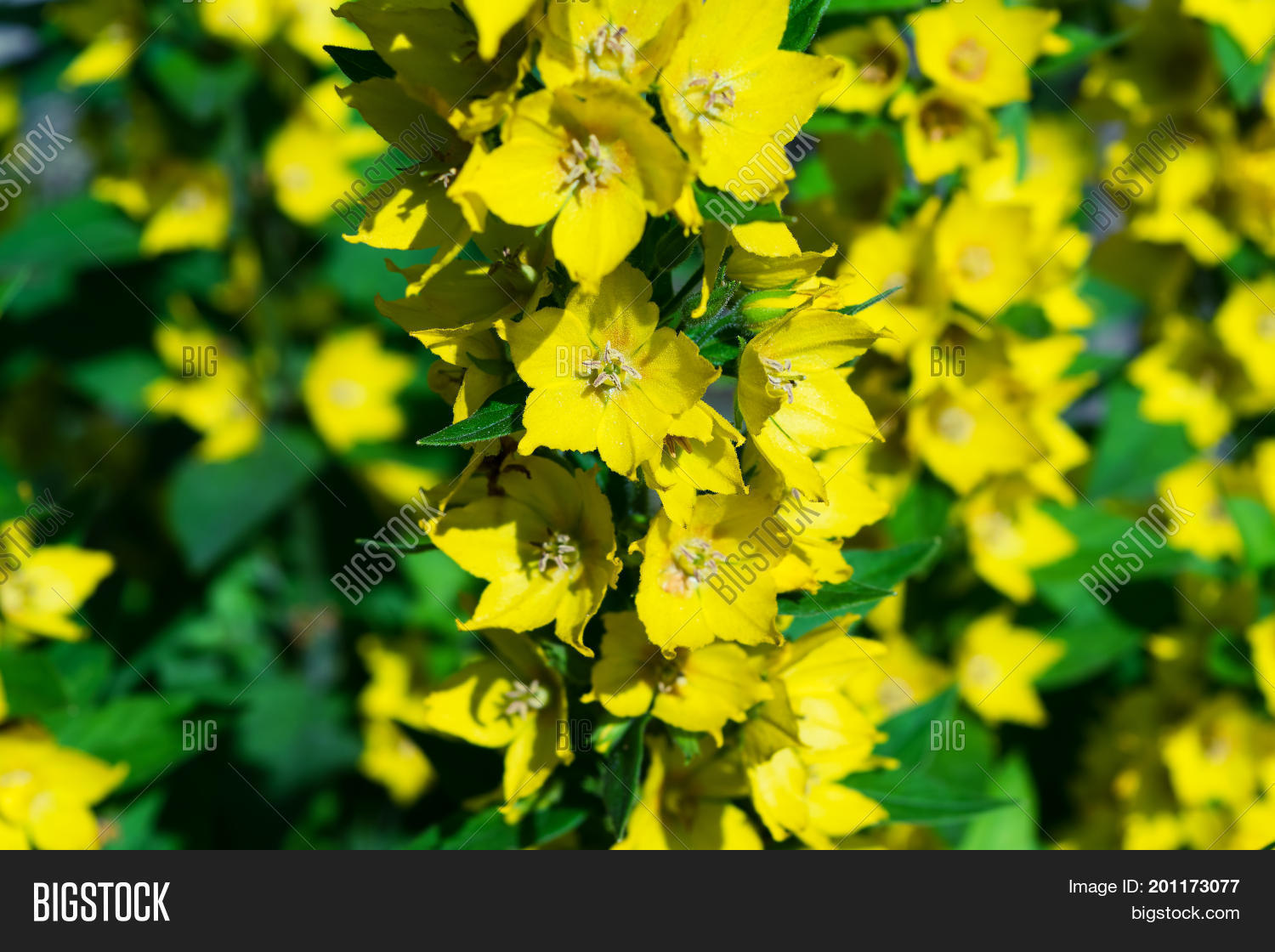 Branches Beautiful Image Photo Free Trial Bigstock