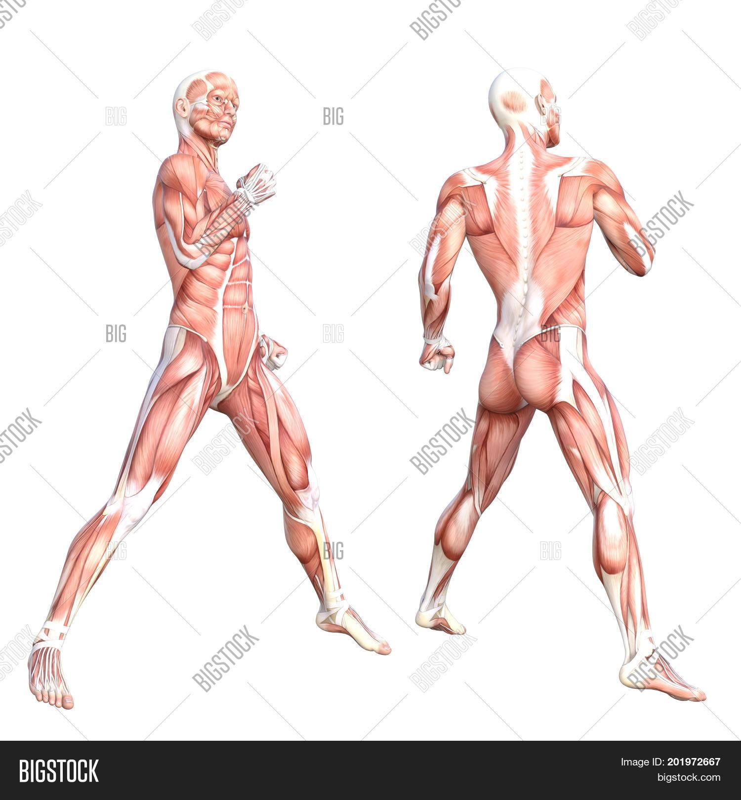 Conceptual Anatomy Image Photo Free Trial Bigstock