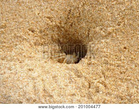 Crabe dans le sable - Île de Phu Quoc - Vietnam
