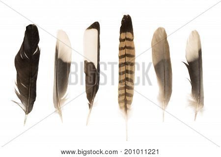 Various feathers isolated on a white background
