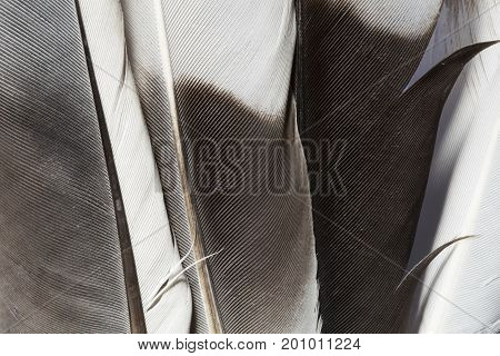Various feathers texture close up as background