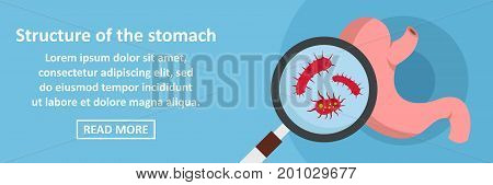 Structure of the stomach banner horizontal concept. Flat illustration of structure of the stomach banner horizontal vector concept for web