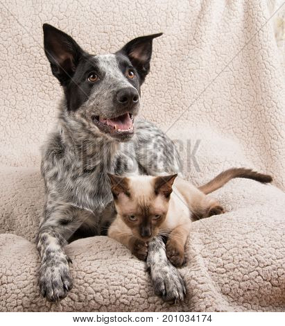 Young dog and cat lying down on a soft blanket