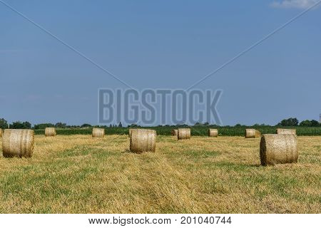 Round bales of straw on cut grain field. Round straw bales in harvested fields and blue sky with clouds. Round bales of hay left in the field after harvesting.