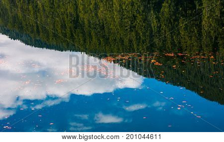 Foliage On The Water Reflecting Spruce Forest