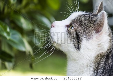 Cat observing it's prey in a garden tree