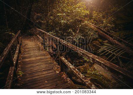 Old Bridge In Jungle. Nature Rain Forest. Tropical Rainforest Landscape. Malaysia, Asia, Borneo, Sab