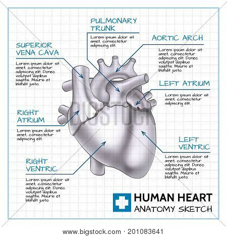 Medical internal organ concept with human heart anatomy on paper sheet in sketch style isolated vector illustration