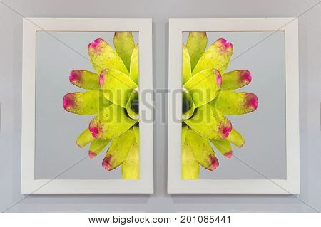 Two Bromeliad images must be assembled on the colored walls.The concept of teamwork coordination