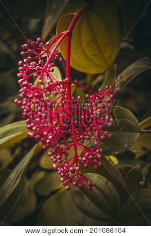Unusual plants in the jungle. Sabah Borneo Malaysia