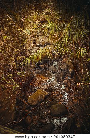 Spring In The Jungle. Nature Rain Forest. Tropical Rainforest Landscape. Malaysia, Asia, Borneo, Sab