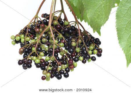 Elderberries On A White Background