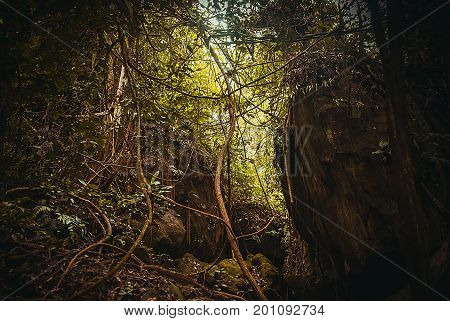 Nature Rain Forest. Tropical Rainforest Landscape. Malaysia, Asia, Borneo, Sabah