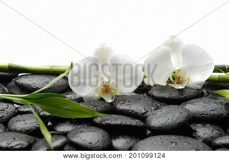 Wet black stones background - white orchid and bamboo grove