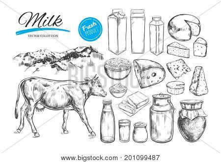 Dairy products vector collection. Cow milk products cheese butter sour cream curd yogurt. Farm foods. Farm landscape with cow. Hand drawn illustration. Isolated objects on white
